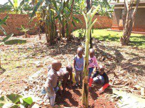 kids-from-orphanage-uganda-plant-matoke-at-farm